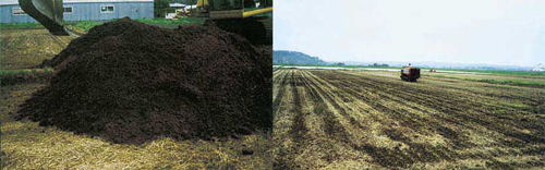 不耕起栽培農法 由利本荘産 農薬・化学肥料不使用 玄米