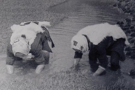 田園風景 由利本荘産 農薬・化学肥料不使用 玄米