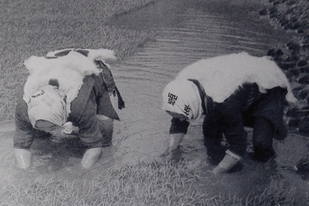田園風景 由利本荘産 農薬・化学肥料不使用 ササニシキ