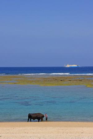 徳之島の海水