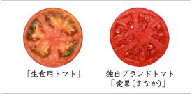 生食用トマト、独自ブランドトマト「愛果(まなか)」の紹介画像