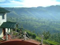 ヌワラエリア地区ペドロ茶園:癒しの紅茶専門店リーフィー