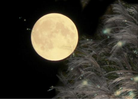 写真:満月とすすき