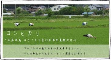コシヒカリ 兵庫但馬 コウノトリ育むお米生産部会作