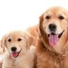 愛犬のライフステージ