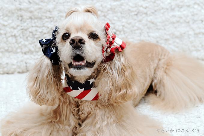 犬用 クールネック 熱中症対策 イヤーシュシュとコーディネート アメリカンシリーズ