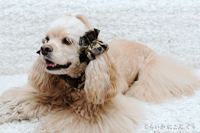 犬用 クールネック 熱中症対策 イヤーシュシュと