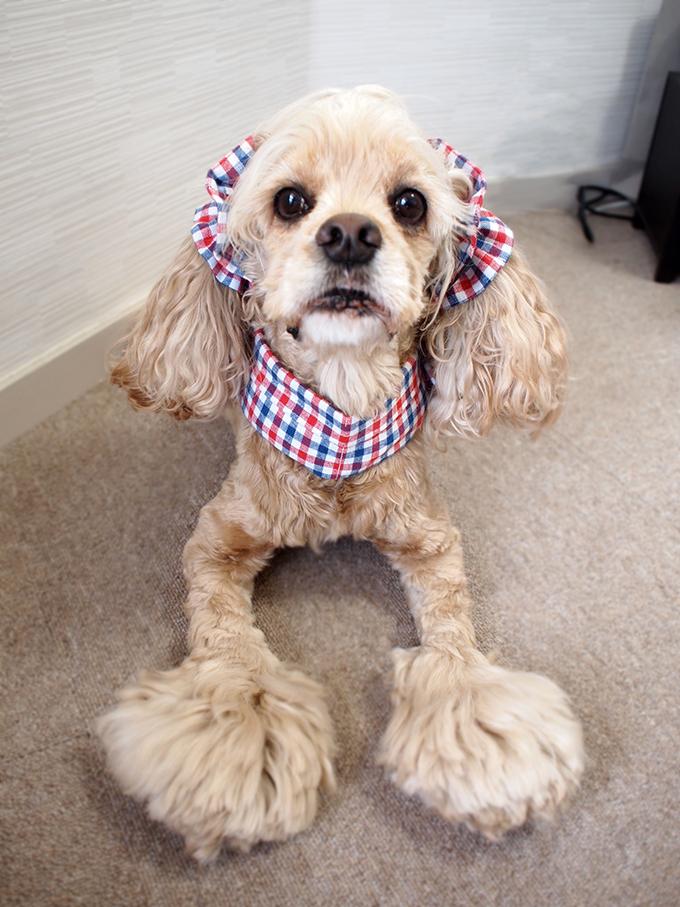犬用 クールネック 熱中症対策 全身前から
