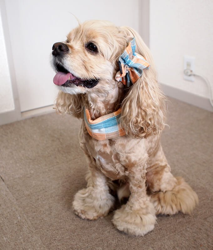 犬用 クールネック 熱中症対策 サマーチェック 夕暮れオレンジ 全身