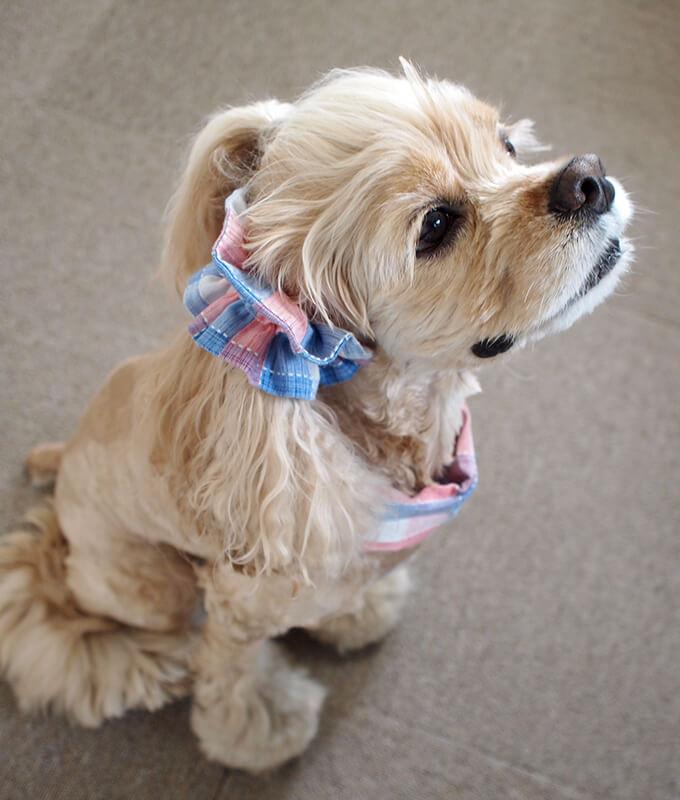 犬用 クールネック 熱中症対策 サマーチェック 朝焼けピンク 上から