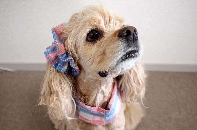 犬用 クールネック 熱中症対策 サマーチェック 朝焼けピンク 斜め前から