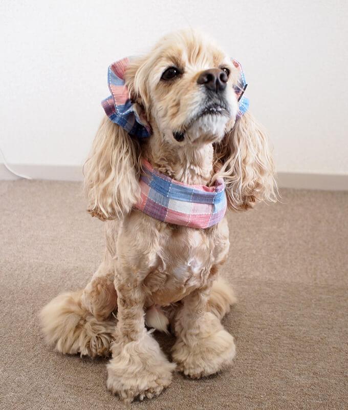 犬用 クールネック 熱中症対策 サマーチェック 朝焼けピンク 全身前から