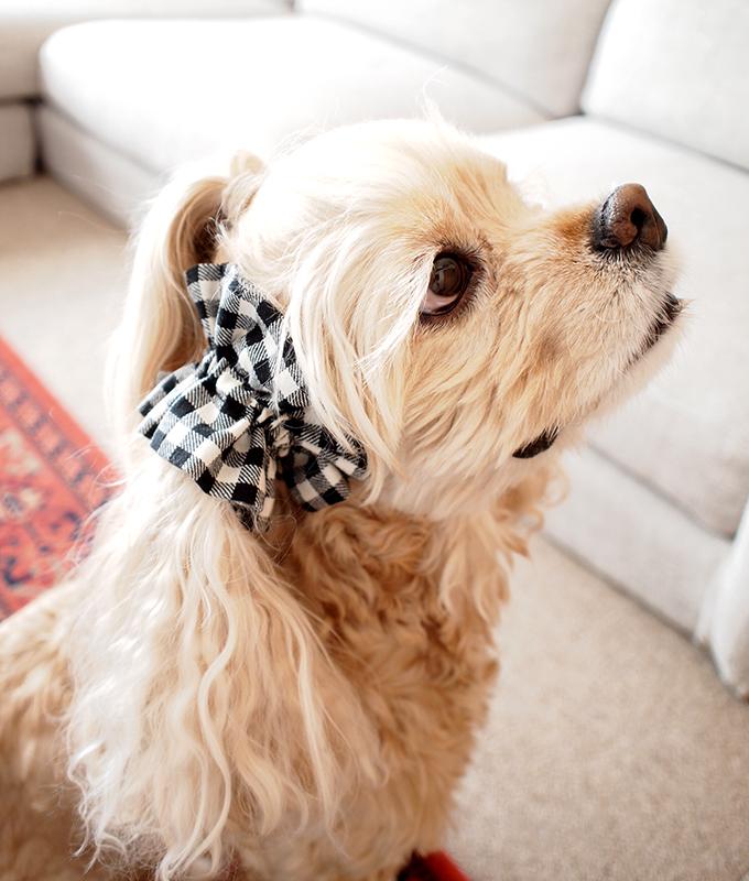 愛犬の耳を彩るイヤーシュシュ クラシカルタータンシリーズ(ホワイトブラック)