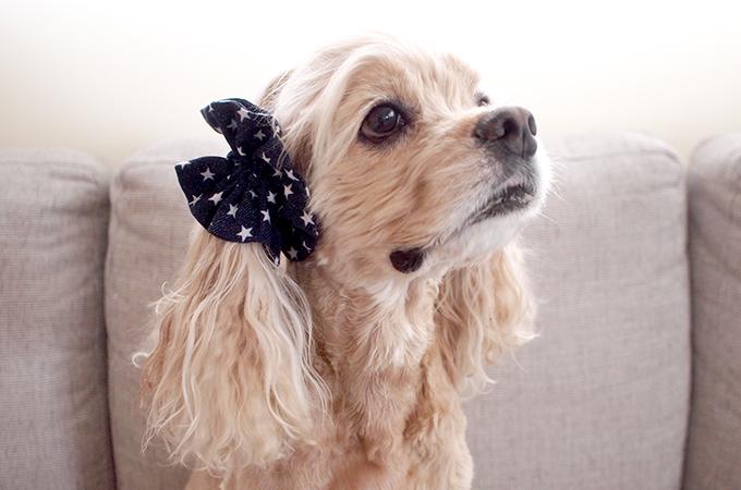 愛犬の耳を彩るイヤーシュシュ デニムスターシリーズ(インディゴ) だいもん部長 横 右