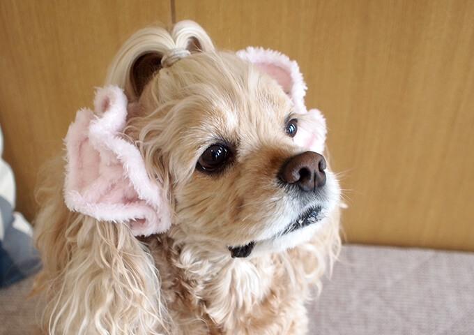 イヤーシュシュ 犬 フラッフィーシリーズ(ピンク) だいもん部長 右上から