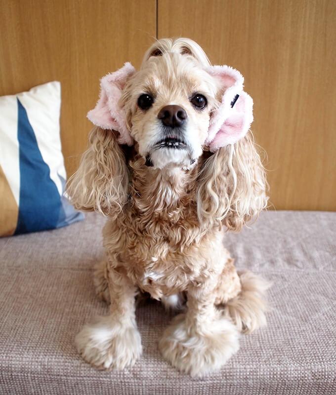 イヤーシュシュ 犬 フラッフィーシリーズ(ピンク) だいもん部長 全身正面