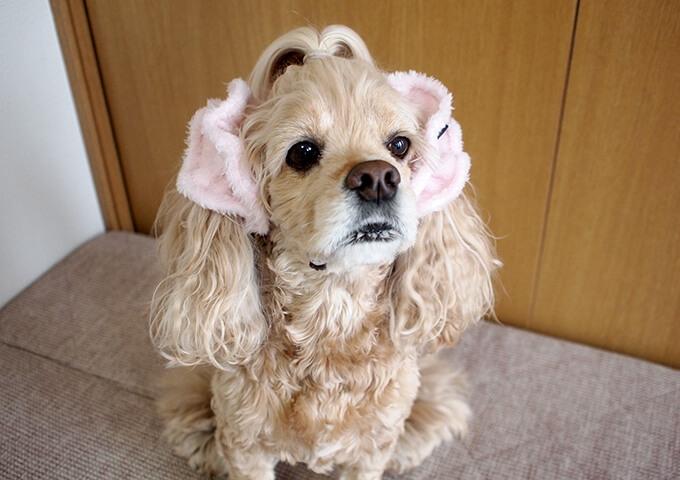 イヤーシュシュ 犬 フラッフィーシリーズ(ピンク) だいもん部長 全身斜め右上から