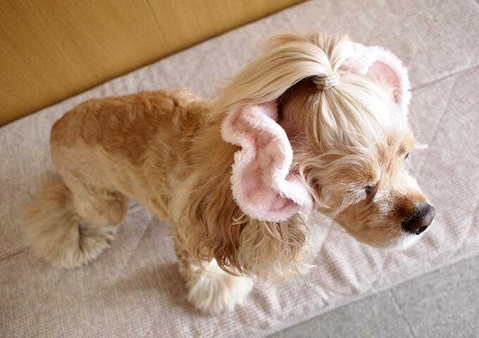 イヤーシュシュ 犬 フラッフィーシリーズ(ピンク) だいもん部長 全身右斜め上から