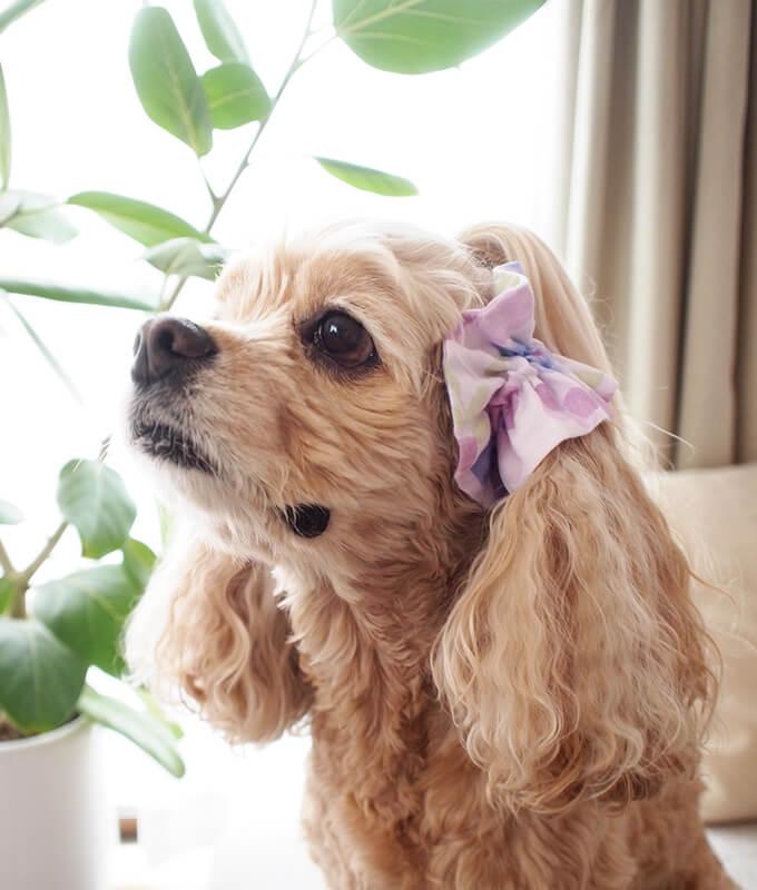 愛犬の耳を彩るイヤーシュシュ フラワーシャワーシリーズ(紫)