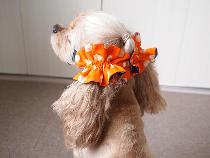 愛犬の耳を彩るイヤーシュシュ ハロウィン 後ろ