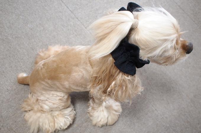 イヤーシュシュ 犬 エアメッシュシリーズ(ブラック) だいもん部長 全身 斜め上から2