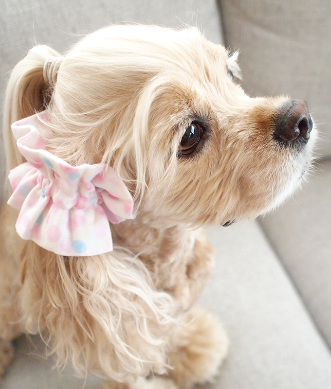 愛犬の耳を彩るイヤーシュシュ 水玉シリーズ(ピンク) だいもん部長 斜め上 右
