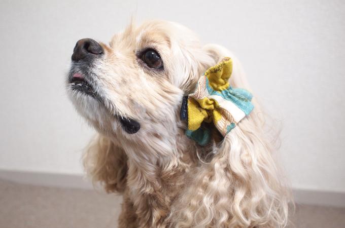愛犬の耳を彩るイヤーシュシュ 和レトロシリーズ(ターコイズ)