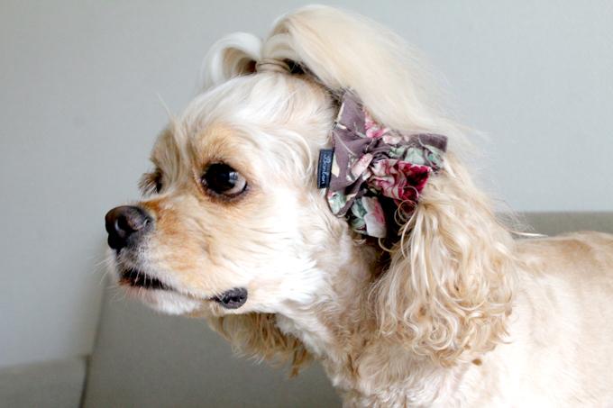 愛犬の耳を彩るイヤーシュシュ ロココシリーズ ローズグレー