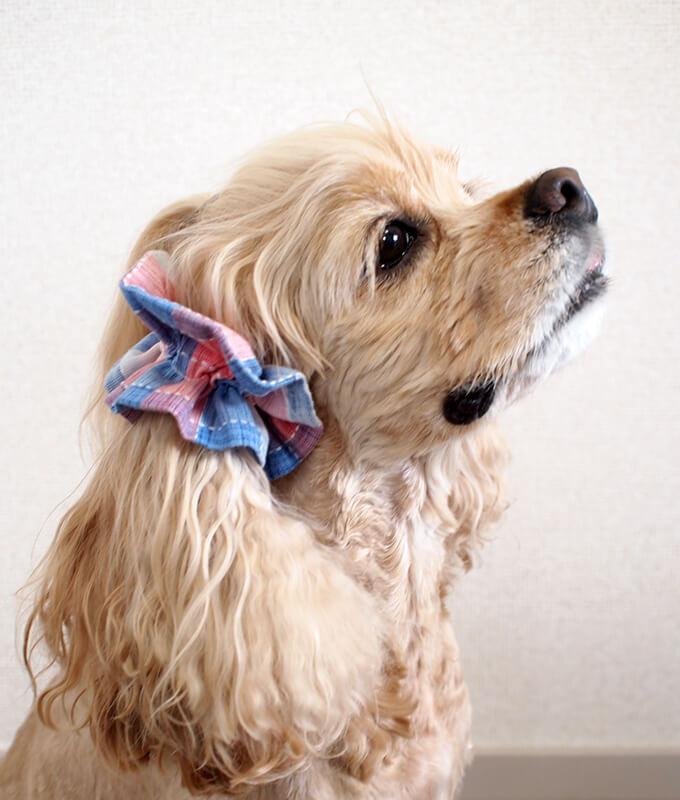 愛犬の耳を彩るイヤーシュシュ  サマーチェック 朝焼けピンク だいもん 真横 右側