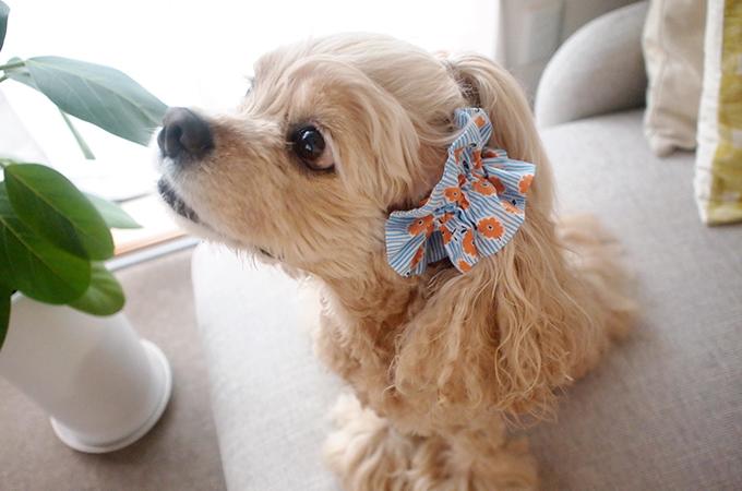 愛犬の耳を彩るイヤーシュシュ ストライプフラワーシリーズ(オレンジ)