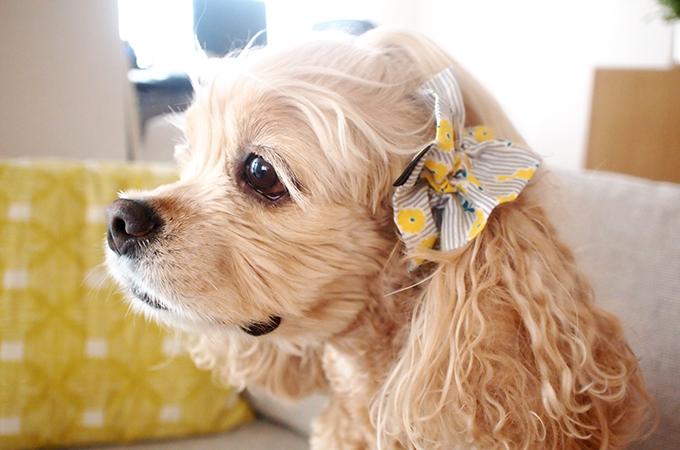 愛犬の耳を彩るイヤーシュシュ ストライプフラワーシリーズ(レモンイエロー)