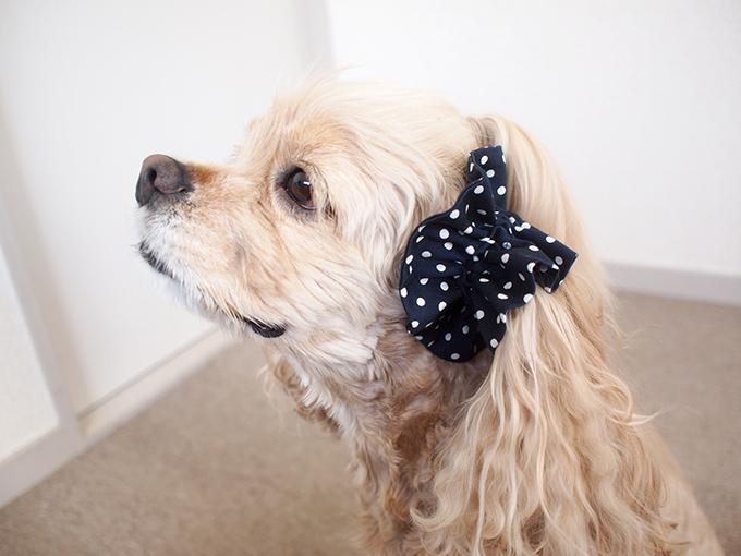 愛犬の耳を彩るイヤーシュシュ  ツイルドット ネイビー