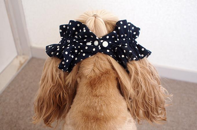 愛犬の耳を彩るイヤーシュシュ  ツイルドット ネイビー だいもん 後ろ