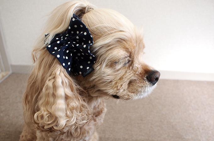愛犬の耳を彩るイヤーシュシュ  ツイルドット ネイビー だいもん 真横 右側