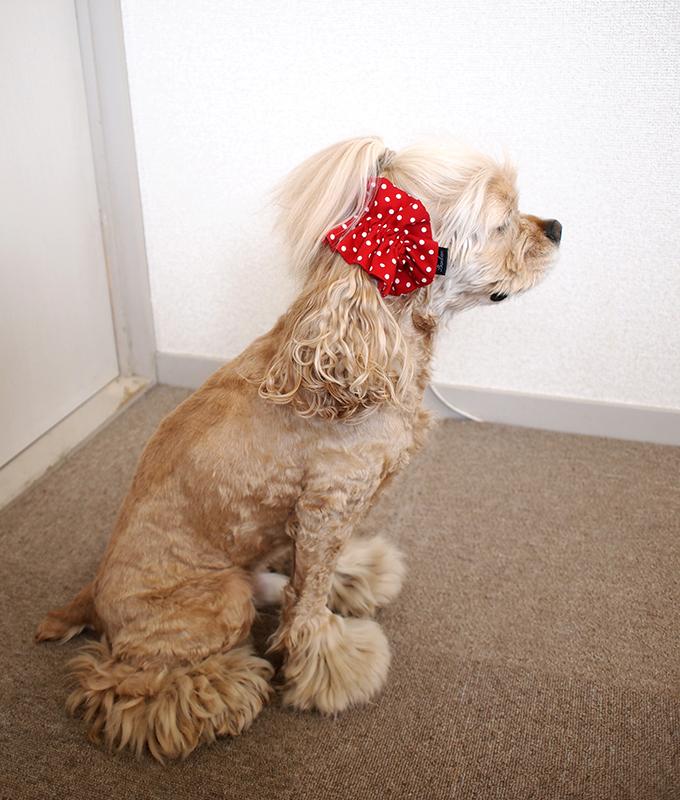 愛犬の耳を彩るイヤーシュシュ  ツイルドット レッド だいもん 全身 横 右側