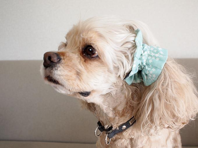 愛犬の耳を彩るイヤーシュシュ 春うららシリーズ みんと だいもん 横