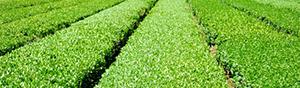 空調服™業種別おすすめ:農業・農園・造園