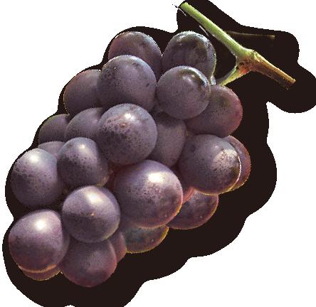 田主丸の巨峰ワインのジュレ