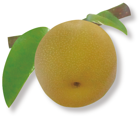 藤山の梨のジュレ