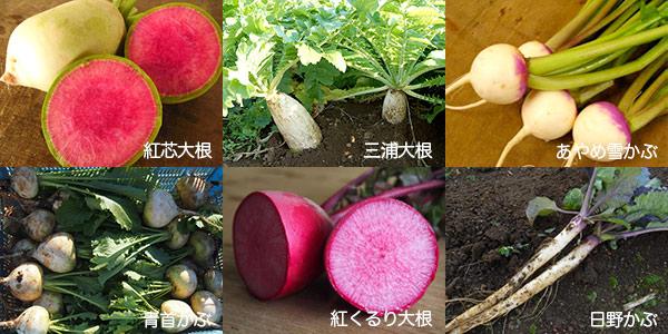 三浦野菜お手軽根菜セット