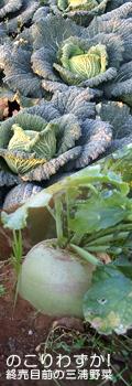 もうすぐ販売終了、のこりわずか|朝採り!三浦野菜市場