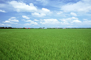 お米のイメージ写真