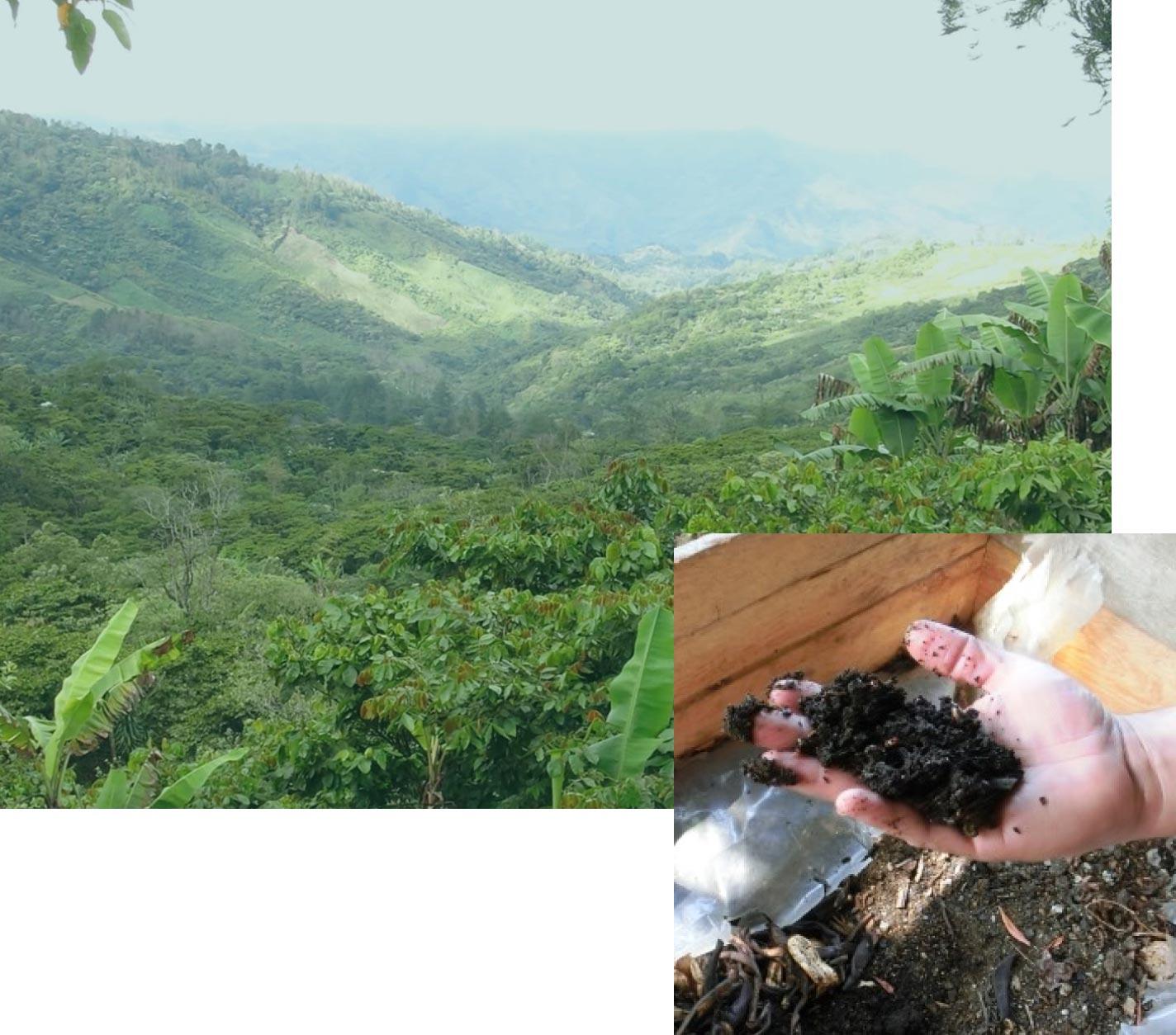 チアパスの雄大な森の中で、化学肥料に一切頼らずに育てられたメキシコ産・マヤビニックコーヒー