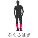 脹脛(ふくらはぎ)
