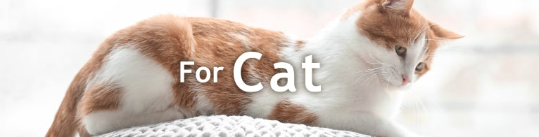 For Cat