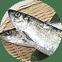 魚(ニシン)