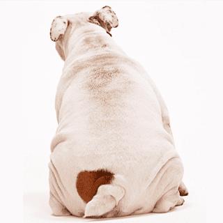 肥満が気になる