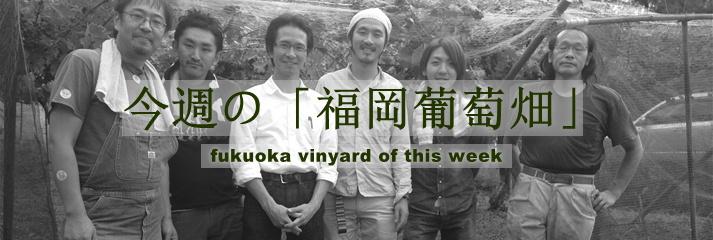 今週の「福岡葡萄畑」