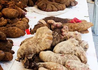 食物繊維たっぷりで滋養強壮にもよいとされる沖縄のヤマン(山芋)沖縄県うるま市伊計島産「黄金芋」